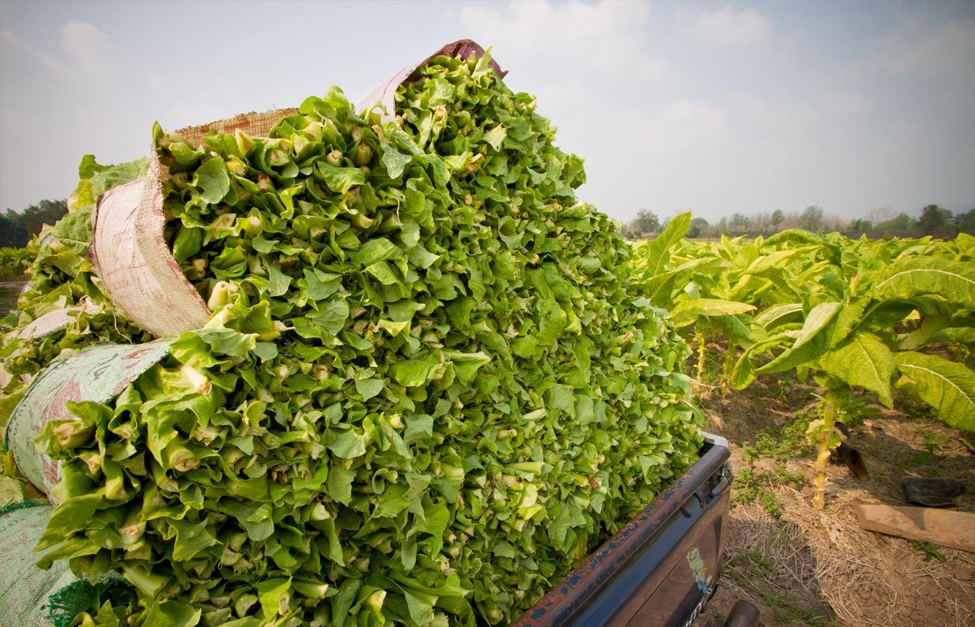 2. Harvesting